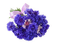 Blue cornflower bouquet. Centaurea cyanus isolated on white background royalty free stock photo