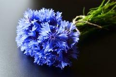 Blue cornflower bouquet Stock Photos