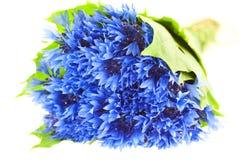 Blue cornflower bunch Royalty Free Stock Photography