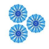 Blue cornflower Centaurea cyanus. Isolated  illustation on white background Royalty Free Stock Photos