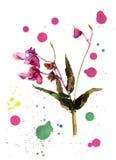 Blue cornflower flower. Artistic Watercolor botanical illustration Stock Photo
