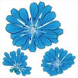 Blue  cornflower flowers isolated on white. Background Royalty Free Stock Photography
