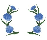 Blue cornflower flowers watercolor floral pattern. Cornflower tile for wallpaper, card or fabric. Watercolor wildflower Royalty Free Stock Images