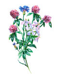 Blue cornflower, saponaria and pink clover shamrock bouquet. Royalty Free Stock Photos