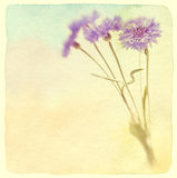 Blue cornflower. Soft focus. Made with lens-baby and macro-lens. Stock Photo
