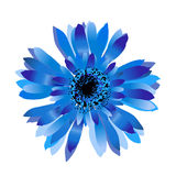 Blue cornflower.Spring flower Royalty Free Stock Photography