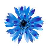 Blue cornflower.Spring flower. Blue cornflower isolated on white.Spring flower vector illustration