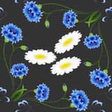 Blue cornflowers with butterflies and chamomiles on a black background, seamless pattern. Blue cornflowers with butterflies and chamomiles on a black background Royalty Free Stock Photography