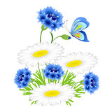 Blue cornflowers and chamomiles with a butterfly on a white background. Stock Images