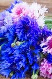 Blue cornflowers stock photography