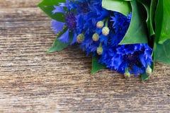 Blue cornflowers Royalty Free Stock Photo