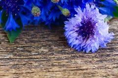 Blue cornflowers stock image
