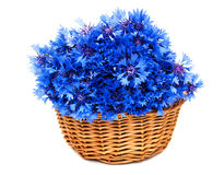 Blue cornflowers Royalty Free Stock Photography
