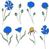 Blue cornflowers and leaves isolated on white background stock illustration