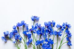 Blue cornflowers over white. A lot of blue cornflowers over white wooden background, copy space Royalty Free Stock Image