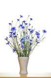 Blue cornflowers in vase Stock Images