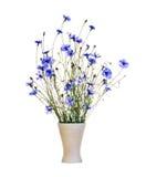 Blue cornflowers in vase Stock Photography