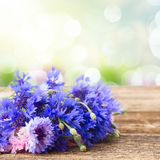 Blue cornflowers on white Stock Photo