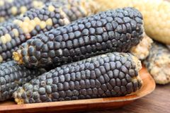 Blue corns Stock Photo