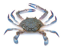 Blue crab Stock Photos