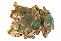 Blue crab Stock Image