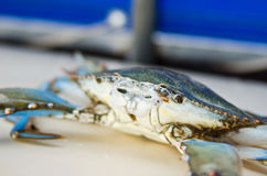 Blue crab Aegean Sea Royalty Free Stock Photos