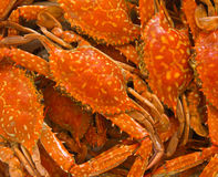 Blue crab boiled Stock Image