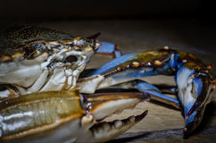 Blue Crab with claw side view Royalty Free Stock Photos