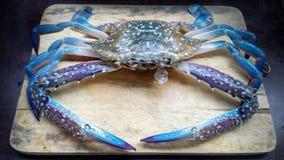Blue crab fresh Stock Photography