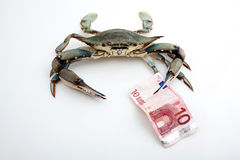 Blue crab holding a bank note Royalty Free Stock Photography