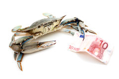 Blue crab holding a banknote Royalty Free Stock Photos