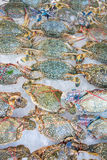 Blue crab on ice at the market Royalty Free Stock Images