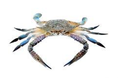 Blue crab. Isolated on white background Stock Image