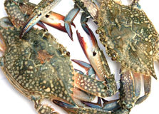 Blue crab isolated Stock Images