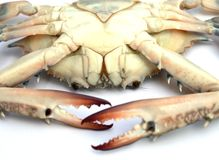 Blue crab isolated Stock Photos