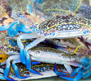 Blue crab market Stock Images