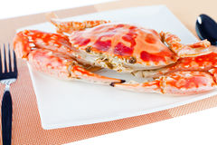 Blue crab on a plate Stock Photography