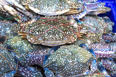 Blue crab for sale Stock Photo