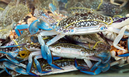 Blue crab seafood c fish market. Blue crab seafood close-up in fish market Stock Photos