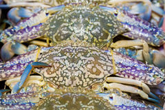 Blue crab. Blue swimmer crab, Blue manna crab seafood close-up in fish market Royalty Free Stock Photos