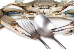 Blue crab on white background Stock Images