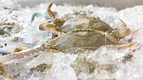 Blue crabs on ice. In open buffet restaurant Royalty Free Stock Photography