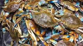 Blue Crabs. From South Louisiana Royalty Free Stock Photos