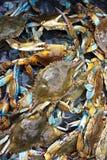 Blue Crabs. From South Louisiana Stock Photos