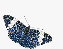 Blue Cracker Butterfly Cutout Stock Photo