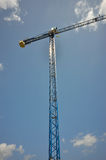 Blue crane isolated Stock Images
