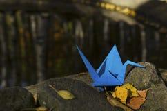 Blue crane. Sunset light Stock Image
