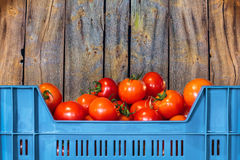 Blue crate with fresh tomatoes Royalty Free Stock Photography