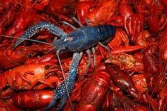Blue crawfish Stock Photos