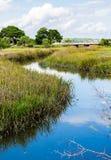 Blue Creek Through Green Marsh Grass Stock Photography